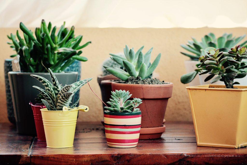 decoración low cost plantas